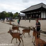 Daytripping to Nara, Japan