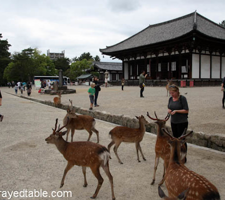 Daytripping to Nara, Japan
