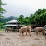 Elephant Conservation Center, Chiang Mai, Thailand