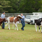 The Maleny Show – 2012