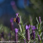 Lavender & Bee photo-shoot