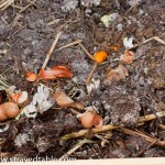 Compost: Part 2 – What goes into Compost