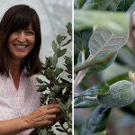 Local Farmers : Sally Hookey, Hinterland Feijoas
