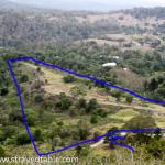 Farm Life:  Guinea Fowl and Seeds