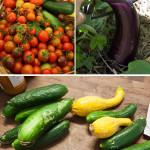 The Garden Share Collective, November