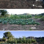 The Garden Share Collective  :  August 2014