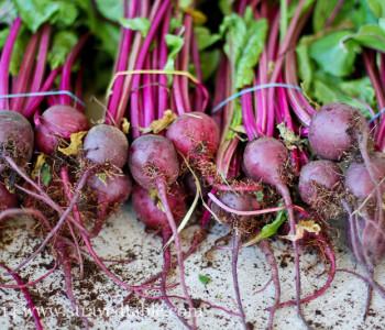 Garden Share Collective  :  October 2014 Thumbnail