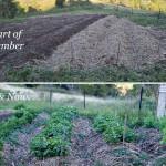 Garden Share Collective  :  October 2014