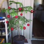 Festive Season – See You Next Year