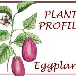 Eggplant  :  PLANT PROFILE