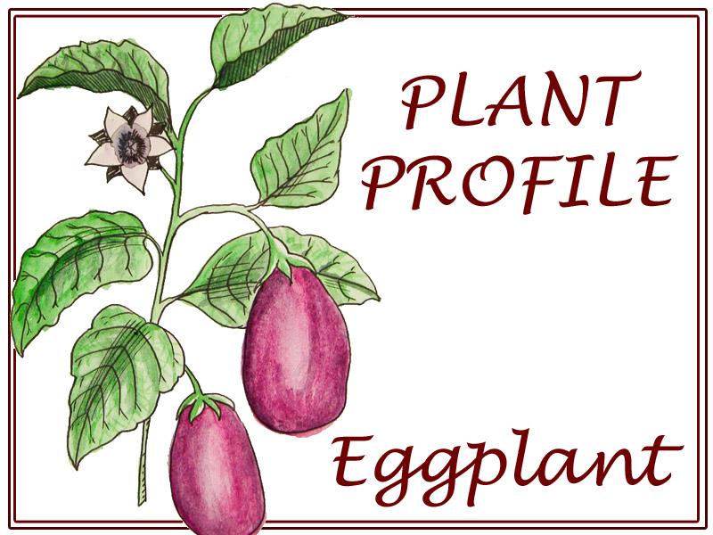 EggplantProfile