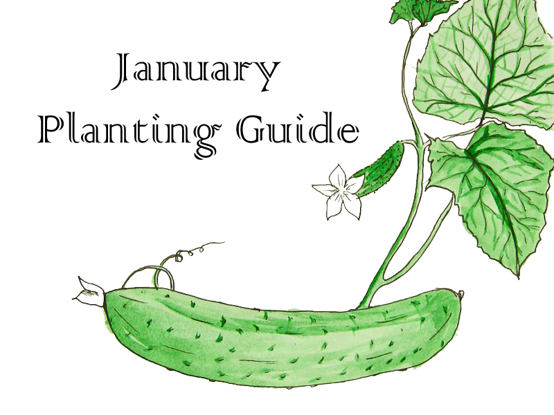 January Planting Guide - FREE Download
