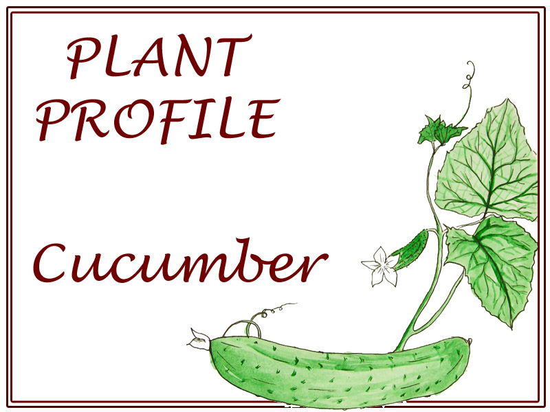 cucumberProfile
