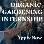 New Market Garden Internship