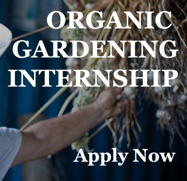 internship copy