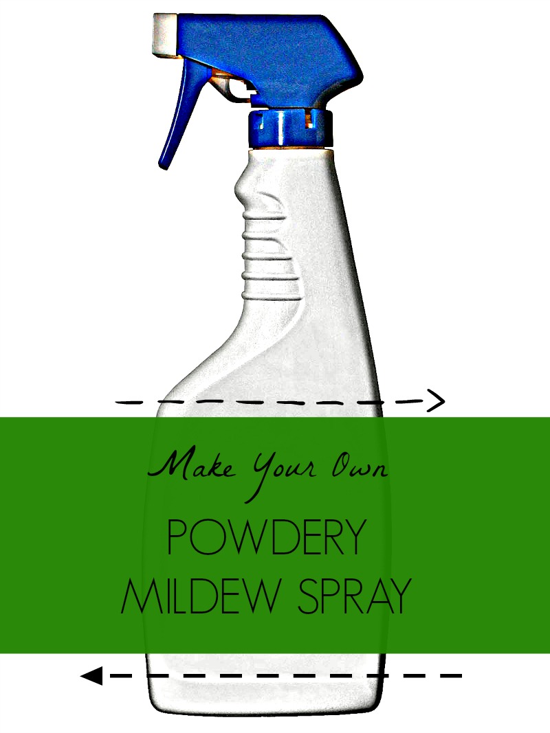 DIY :  POWDERY MILDEW SPRAY