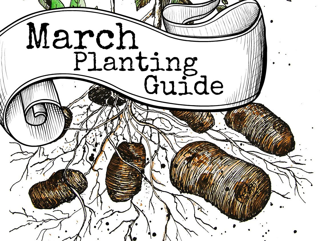 Download FREE Australian March vegetable planting guide