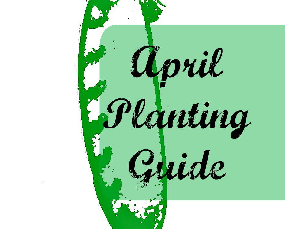 Download FREE Australian APRIL vegetable planting guide