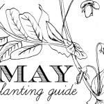 May Planting Guide | Download Free + Colour it in