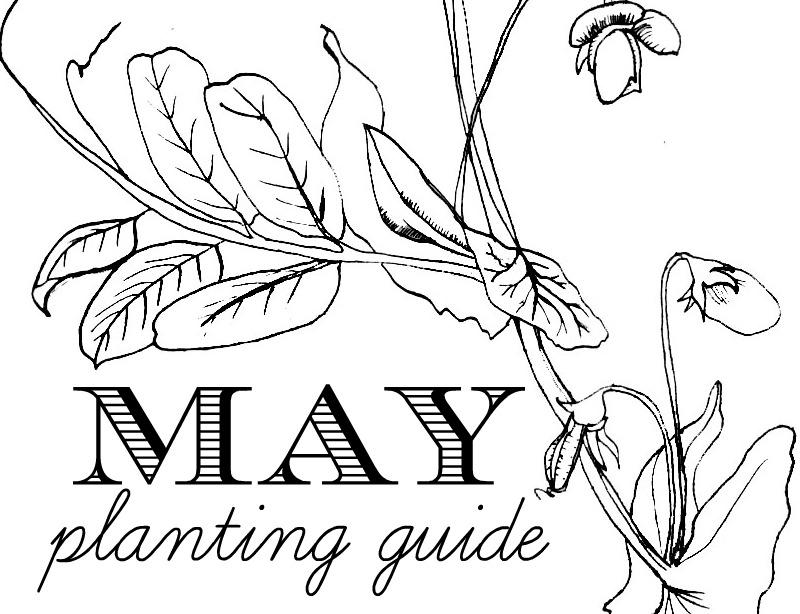 May planting header