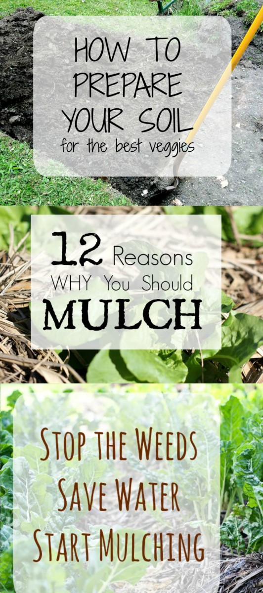 12 Reasons to Mulch