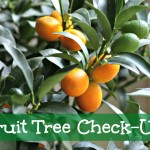 Time to Tend the Fruit Trees