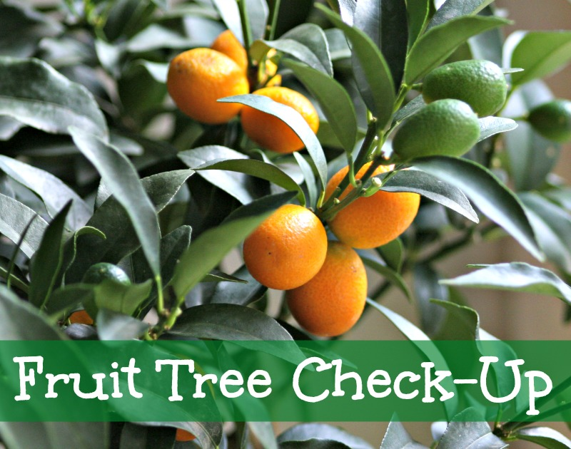 Fruit Tree Check Up & Pruning