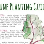 June Planting Chart