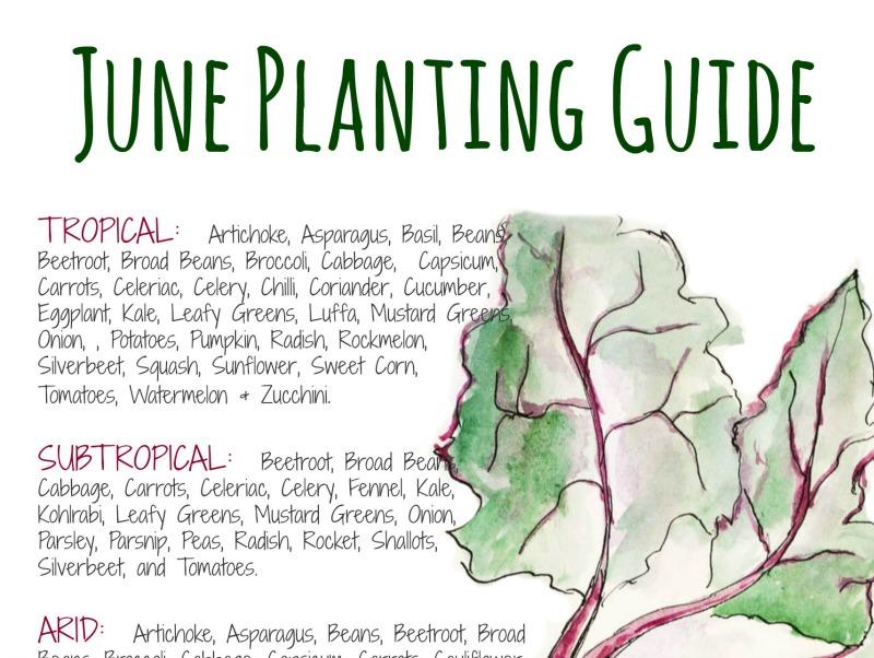 Australian JUNE vegetable planting guide