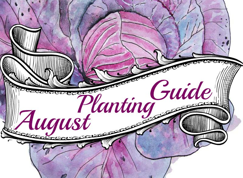 Augustplanting guide