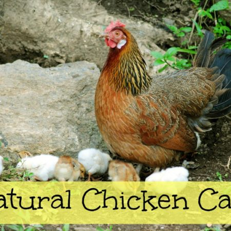 Natural Chicken Care Remedies