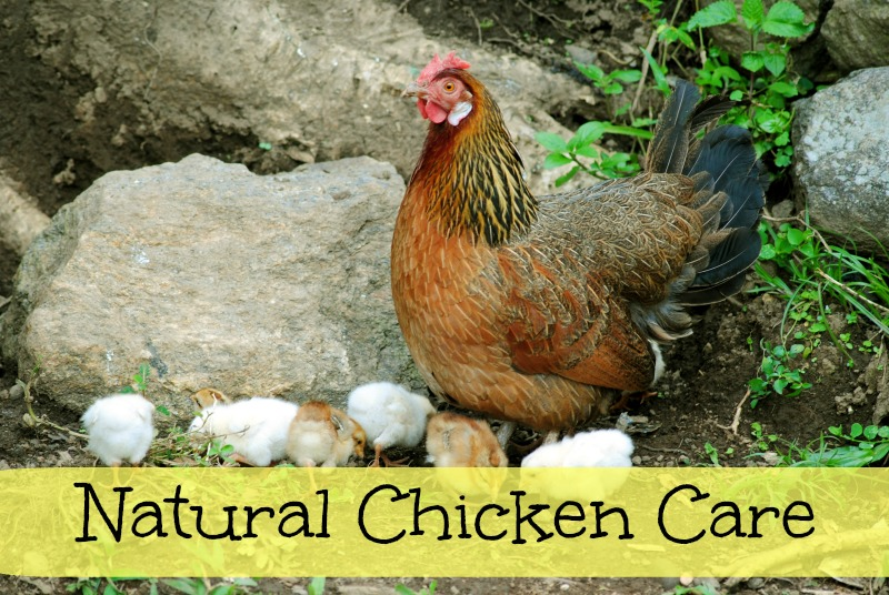 Natural Chicken Care