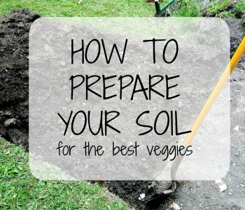 Preparing Your Soil (How to Guide) Thumbnail