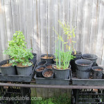 Garden Share Collective : August 2015