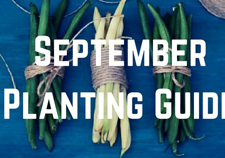 September Planting Guide